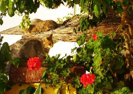 Féline Bronzette - Feline Sunbath