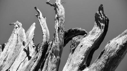 L'arbre aux morts - The dead men tree